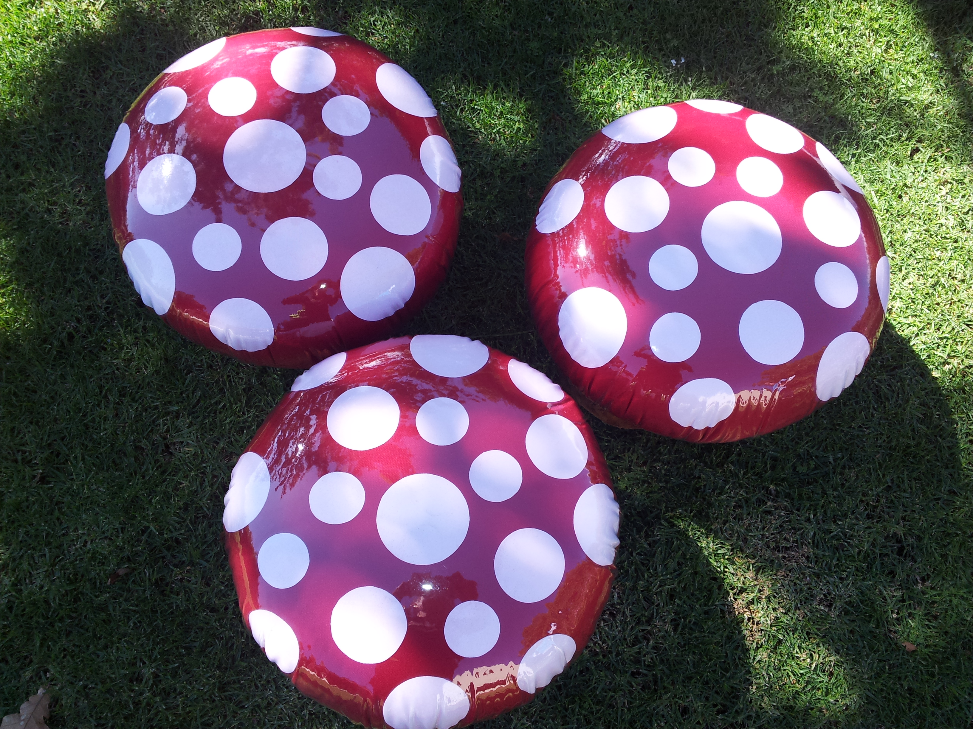 Toadstools tor Rent R30.00 each